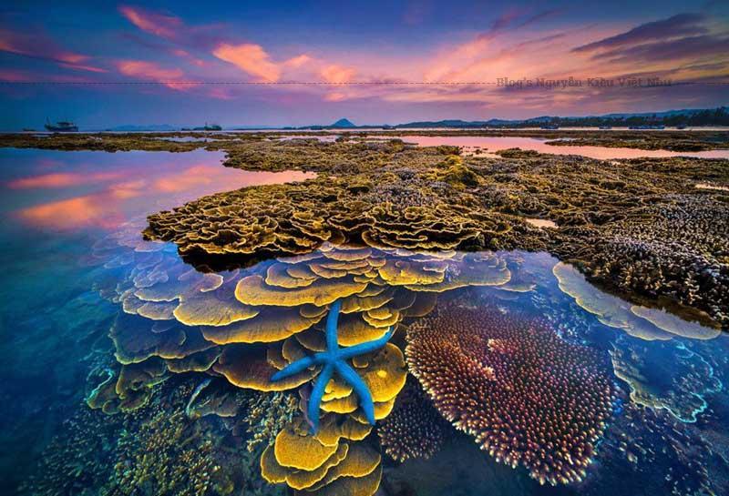 Một dãi san hô được chăm sóc và nuôi trồng tại Ninh Thuận.