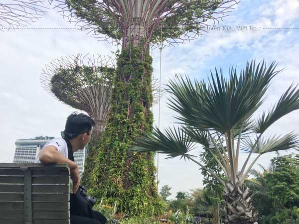Gardens by the Bay là một công viên tự nhiên trải rộng trên 101 hécta (250 mẫu Anh) của đất cải tạo nằm ở trung tâm Singapore và tiếp giáp với Marina.