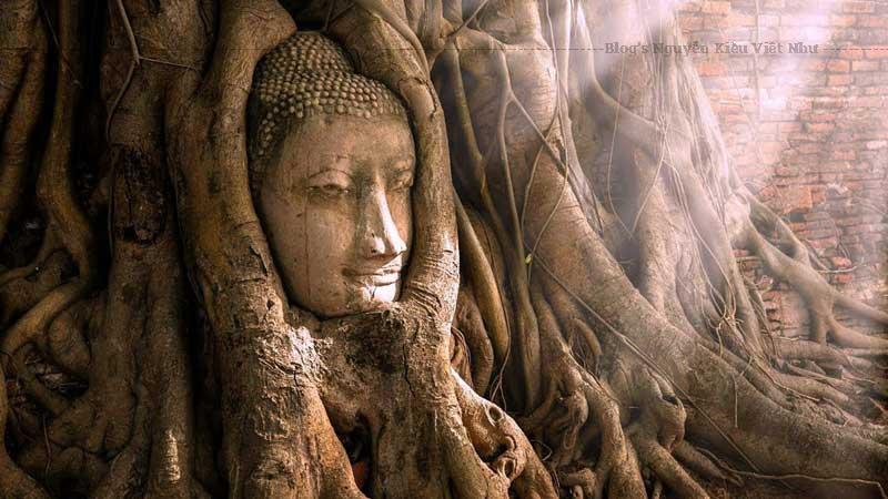Khuôn mặt Phật 700 năm tuổi được bảo vệ toàn vẹn bất chấp rễ cây bao quanh. Gương mặt được nhận xét mang vẻ đẹp thánh thiện và siêu thoát, đem lại cảm giác bình an cho du khách ghé thăm.Đối với người mộ đạo, giữa phế tích đổ nát với nhiều bức tượng mất đầu, sự hiện diện của đầu tượng Phật trong thân cây toát lên ý nghĩa đặc biệt linh thiêng.