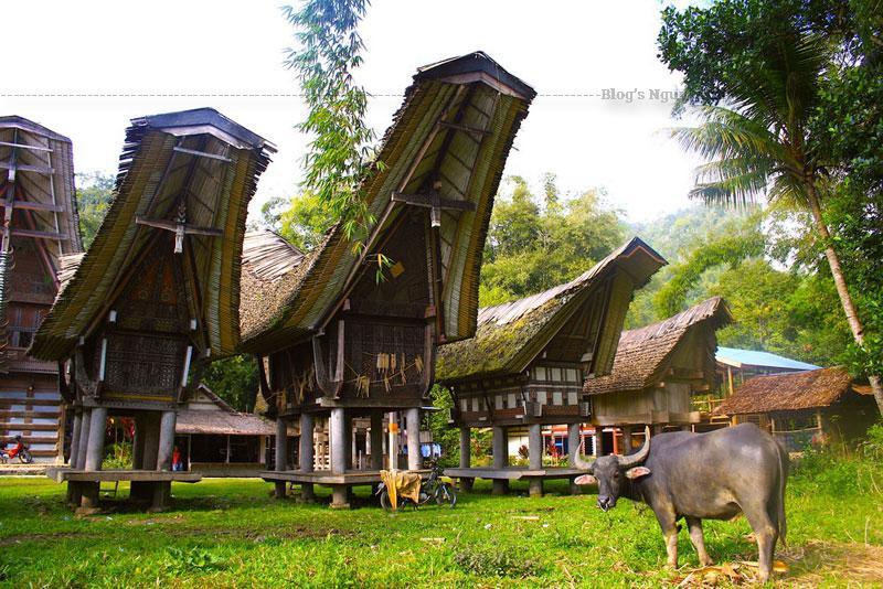 """Theo từ nguyên, tongkonan bắt nguồn từ tongkon, trong tiếng bản địa có nghĩa là ngồi, ngụ ý tongkonan là nơi các thành viên gia đình """"ngồi lại"""" với nhau để gìn giữ truyền thống. Vì thế, tongkonan có vị trí hết sức đặc biệt trong xã hội Toraja."""