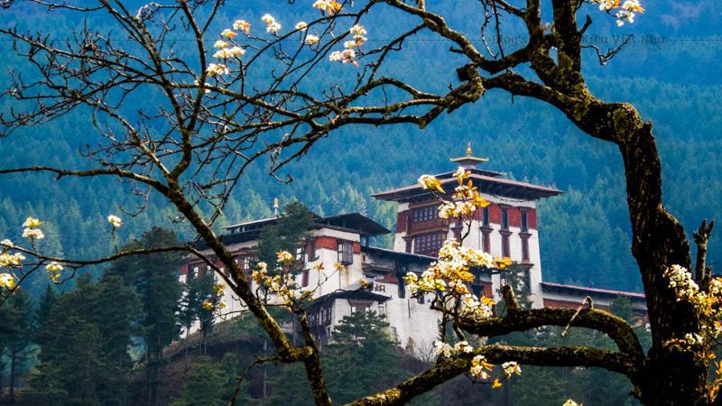 Bhutan có 4 mùa rõ rệt, mùa xuân khí hậu cũng rất đẹp vì lúc ấy có rất nhiều hoa nở khắp Bhutan.