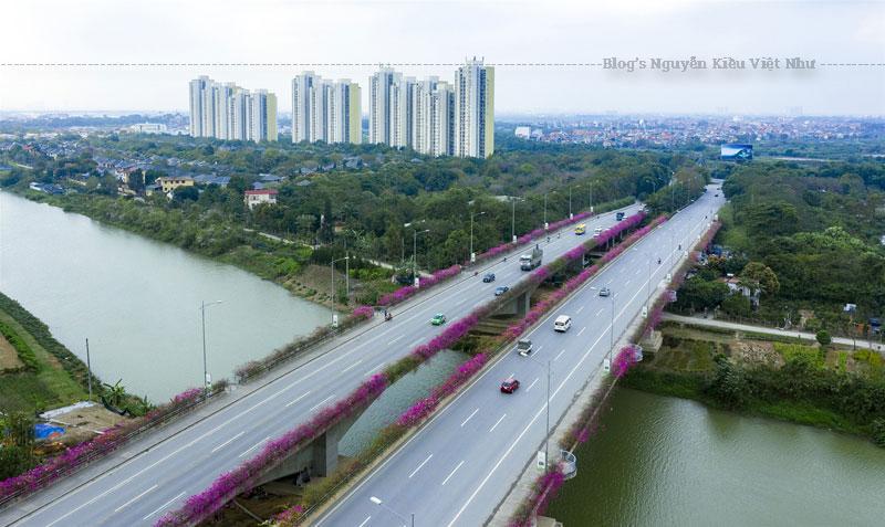 Không chỉ là cây cầu nối tuyến giao thông huyết mạch Hà Nội- Hưng Yên, cầu Bắc Hưng Hải còn được nhiều người tìm đến vì vẻ đẹp nên thơ của hai hàng hoa giấy dọc theo chiều dài của cầu.